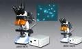 三目荧光显微镜LW200-39LFB