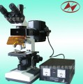 荧光显微镜LW100FB